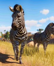 Buy Planet Zoo Steam key key